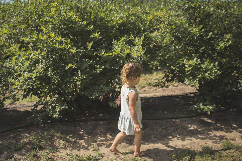 girl walking along row of blueberry bushes, making memories