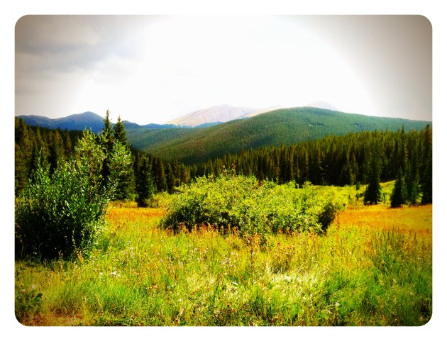 [PHOTO SHOOT LOCATION] Aspen Trees Along Boreas Pass Road in Breckenridge, Colorado.  |  photos[stacysanchez]  Breckenridge wedding photography