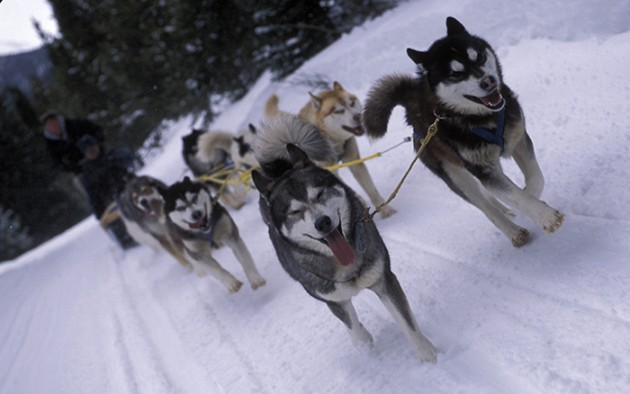 [HOW TO] Book a Dogsled Tour for your Destination Wedding in the Rocky Mountains  |  photo[carlscofield.com]
