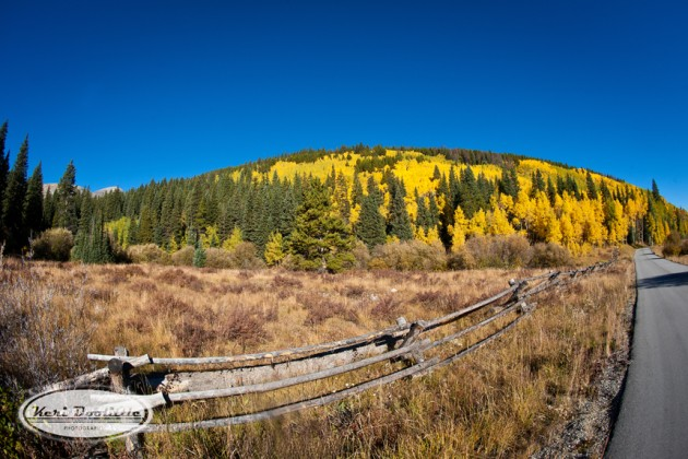Fall Color in the Rocky Mountains by Keri Doolittle Photography  |  photo[keridoolittlephotography.com]  Denver, CO wedding and portrait photographer