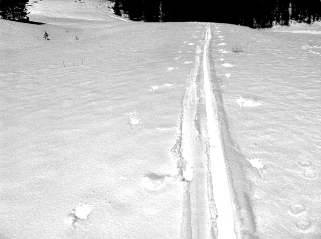 Uphill track in snow.
