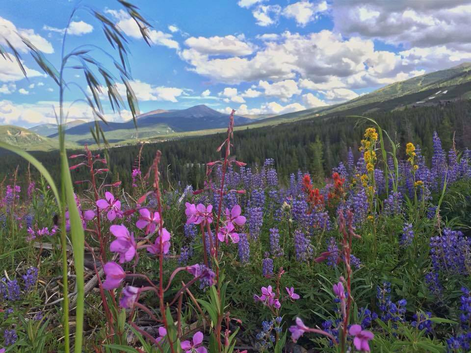 Wildflower Fields on Peak 7 in Breckenridge [Photo Shoot Location]