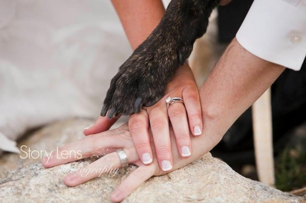 StoryLensPhotography_Abasinwedding_dog-e1377565384580.jpg