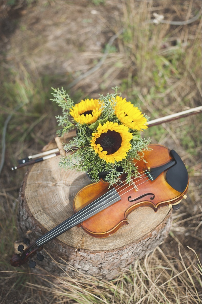 sunflower and violin