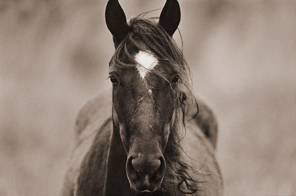 horsesandcoaching