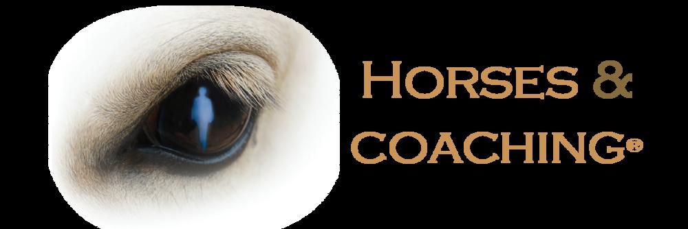 Horses & Coaching.png