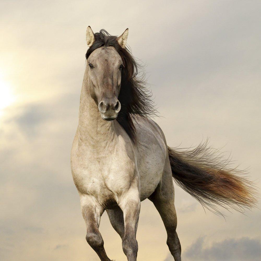 Vous aussi rejoingnez la team Horses and Coaching -