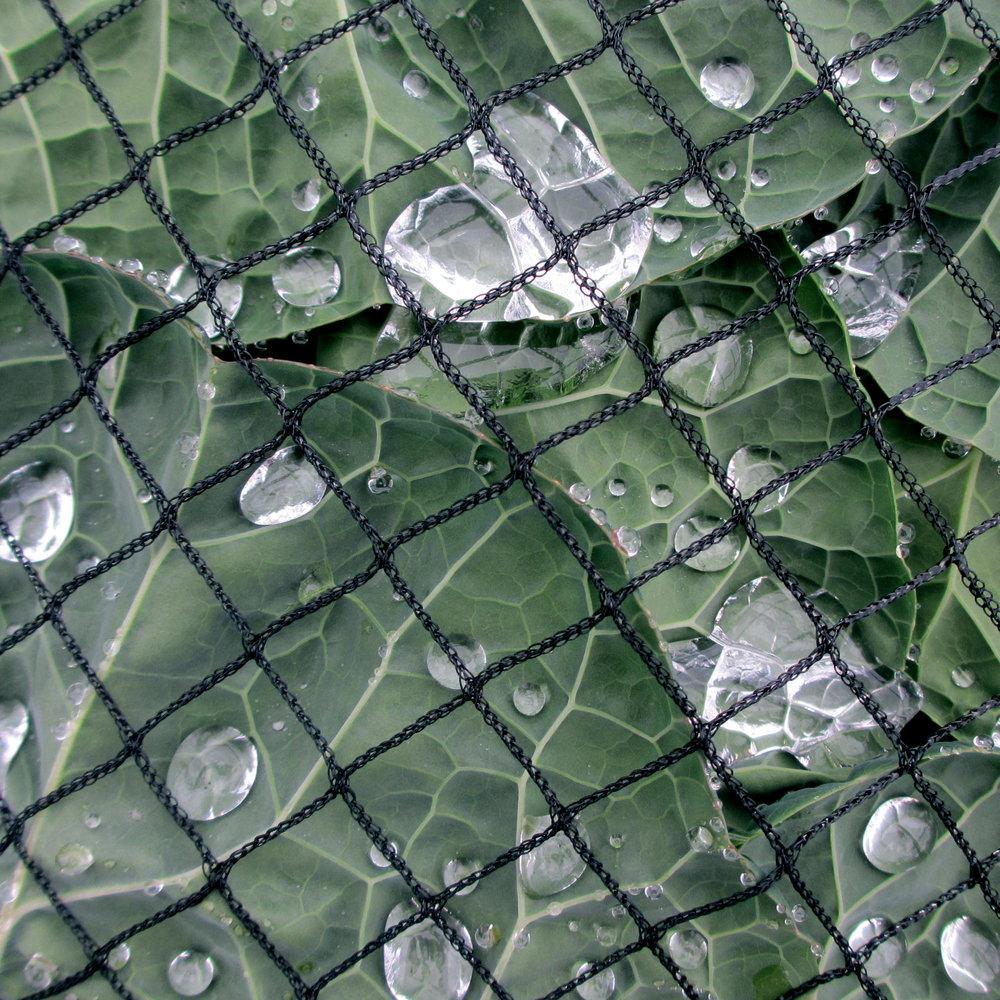 Glassy Drops