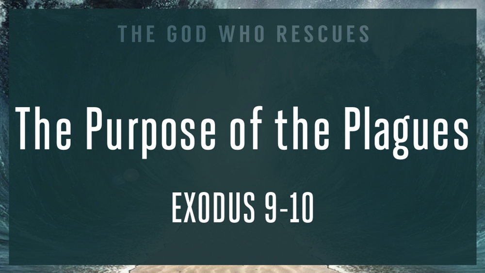 Exodus 9-10 The Purpose of the Plagues.jpg