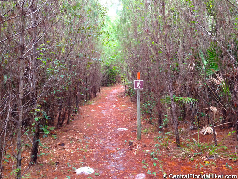 seminole-state-forest-dark-trail-sign.jpg