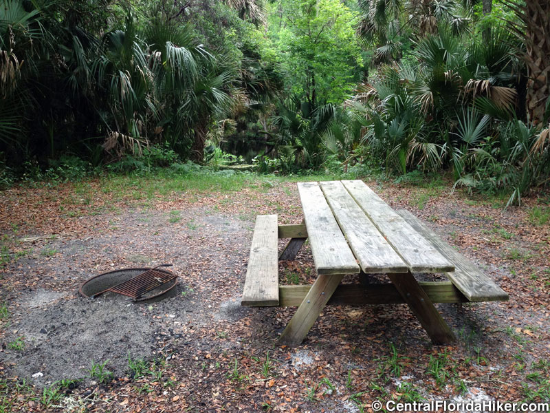 seminole-state-forest-blackwater-campsite.jpg
