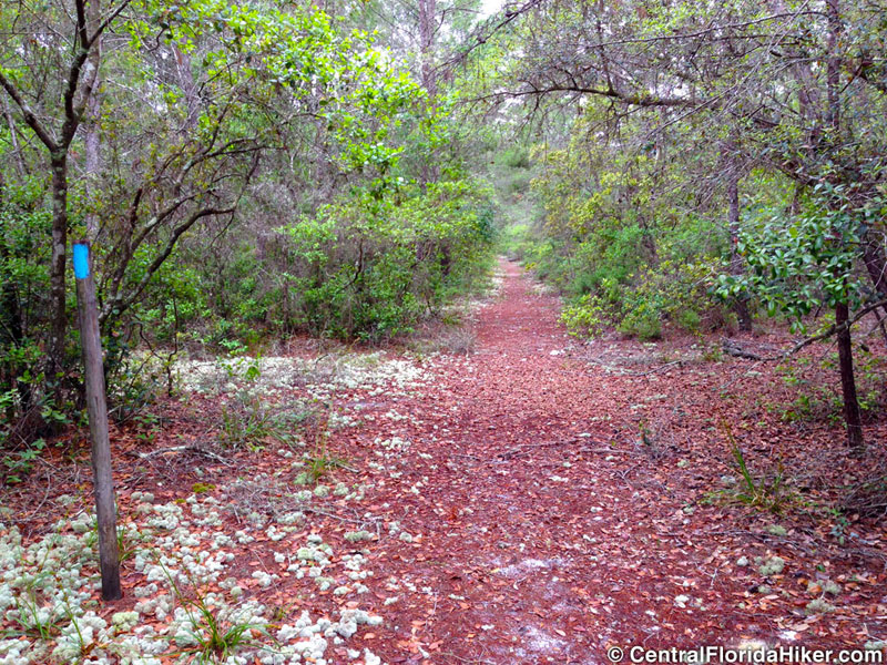 North Sulphur Island Loop in Seminole State Forest