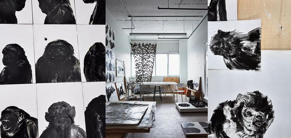 Portraits of Monkeys - Studio