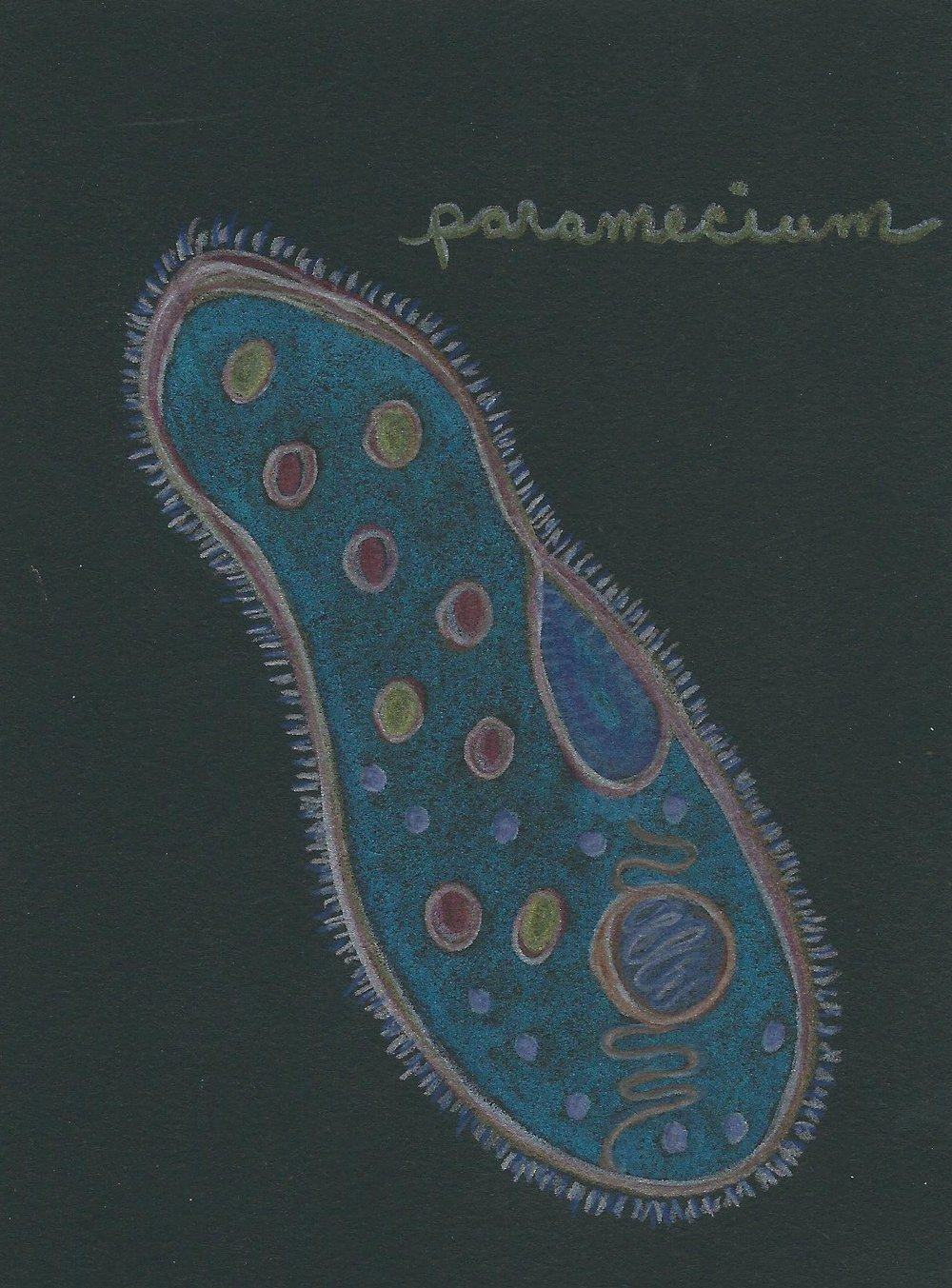 Ciliate.  Colored pencil on black paper