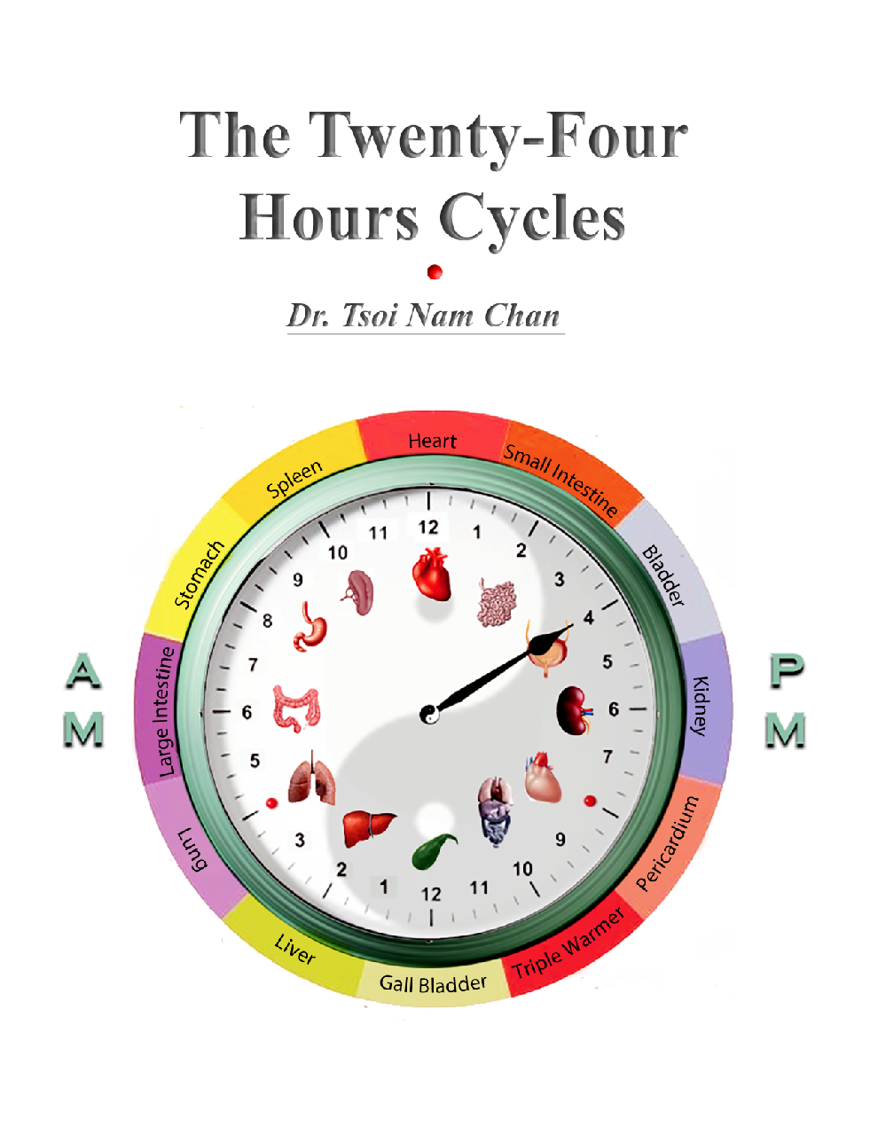 The Twenty-Four Hours Cycles