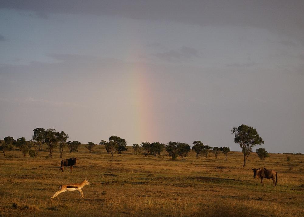 Rainbow Jete 5X7.jpg