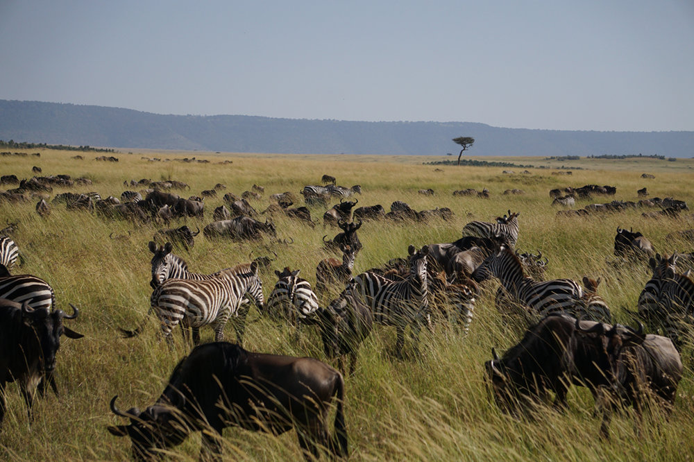The Great Migration 20 X 30.jpg