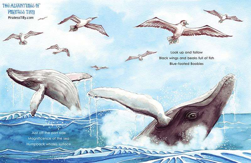 Piratess Tilly whale pages