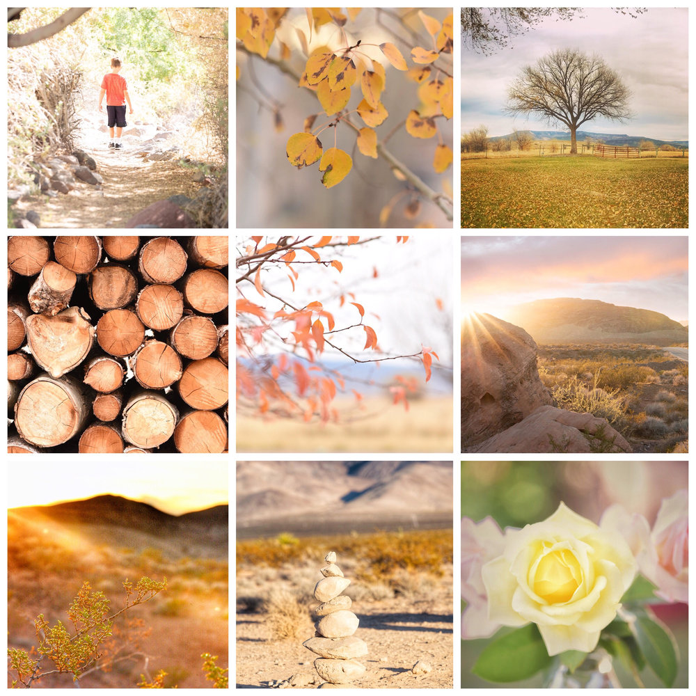 Here's a collage of my top 9 favorite images on DesertBloom Photography's Instagram feed, from November 2018.
