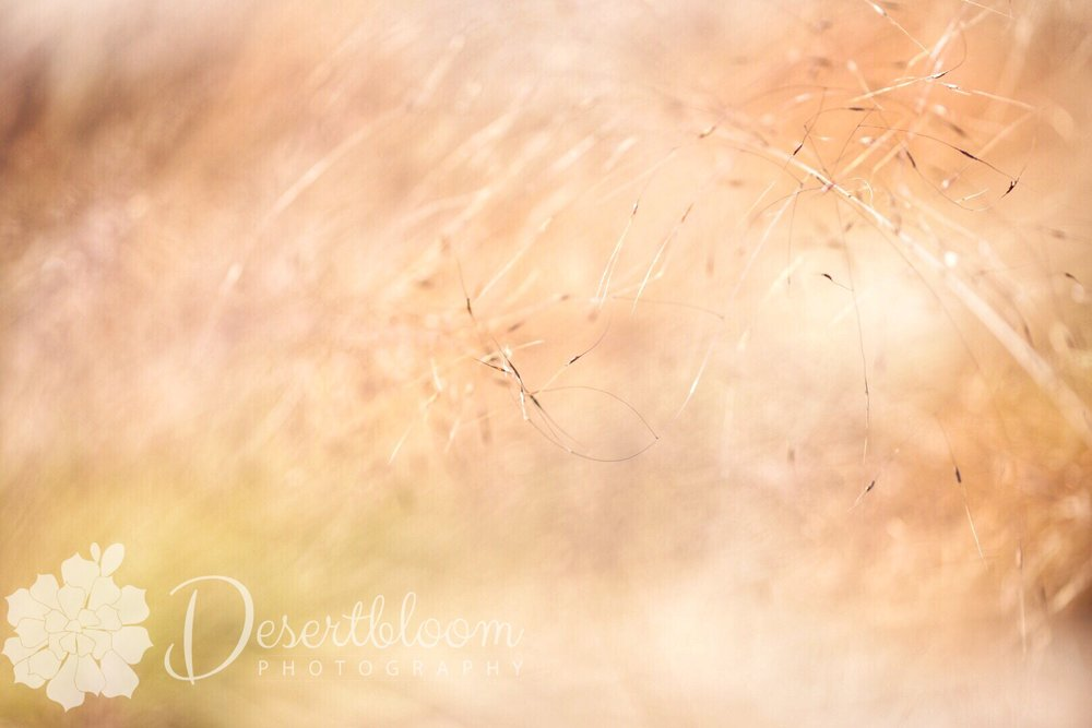 I love the airy-ness of the desert grasses waving in the breeze