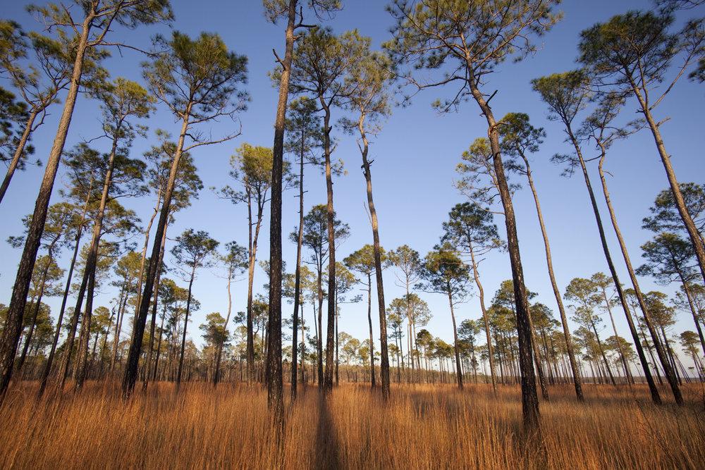 Grand Bay Pines.jpg