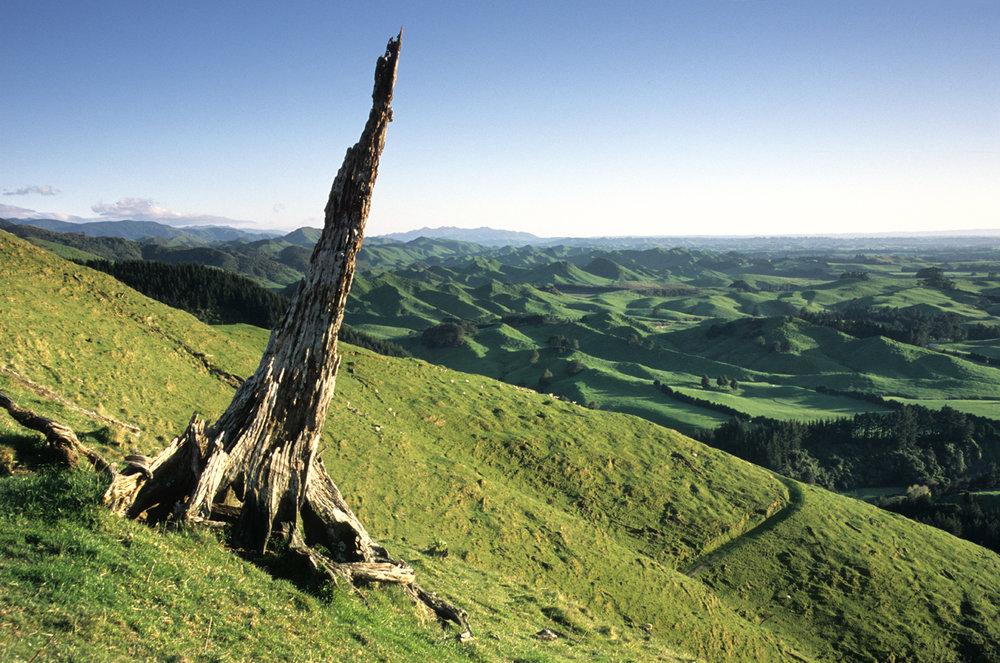 Maori Hill.jpg