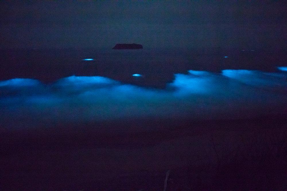 Bioluminesense.jpg