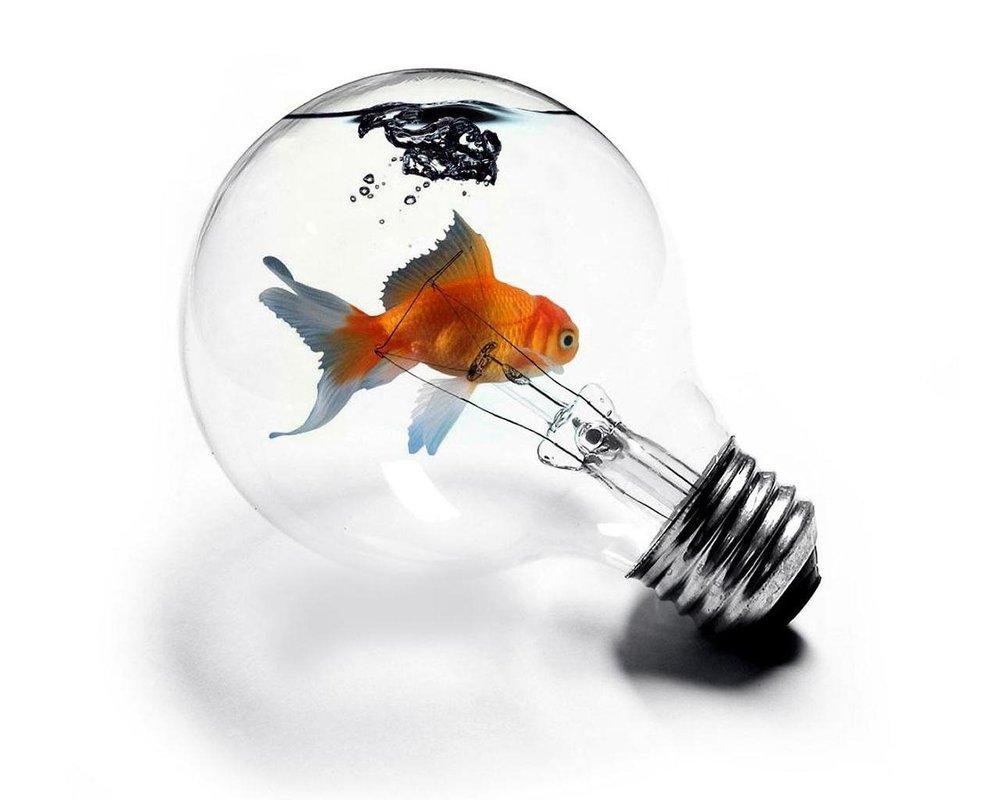 fish in light bulb.jpg