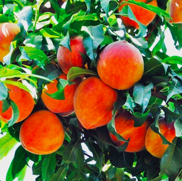 Mom's a Peach! -
