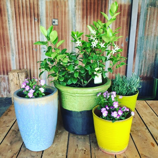 Containers - can add color, fragrance, texture and height to any outdoor area, and when planted with a little knowledge can be perfect for beginning gardeners!
