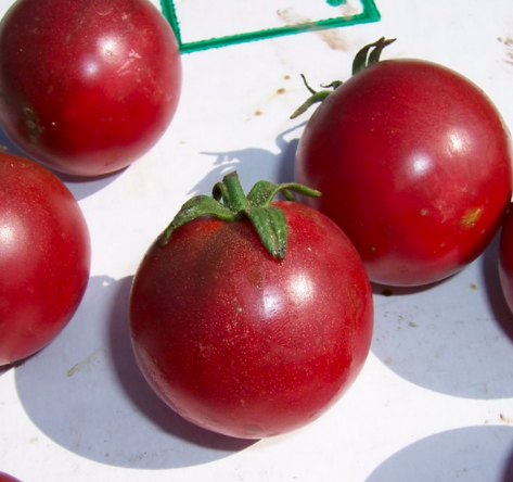 Tomatoes 101 - Soil prep, ground vs. containers, pests and diseases, favorite heirloom varieties--Loretta has it all when it comes to tomatoes!