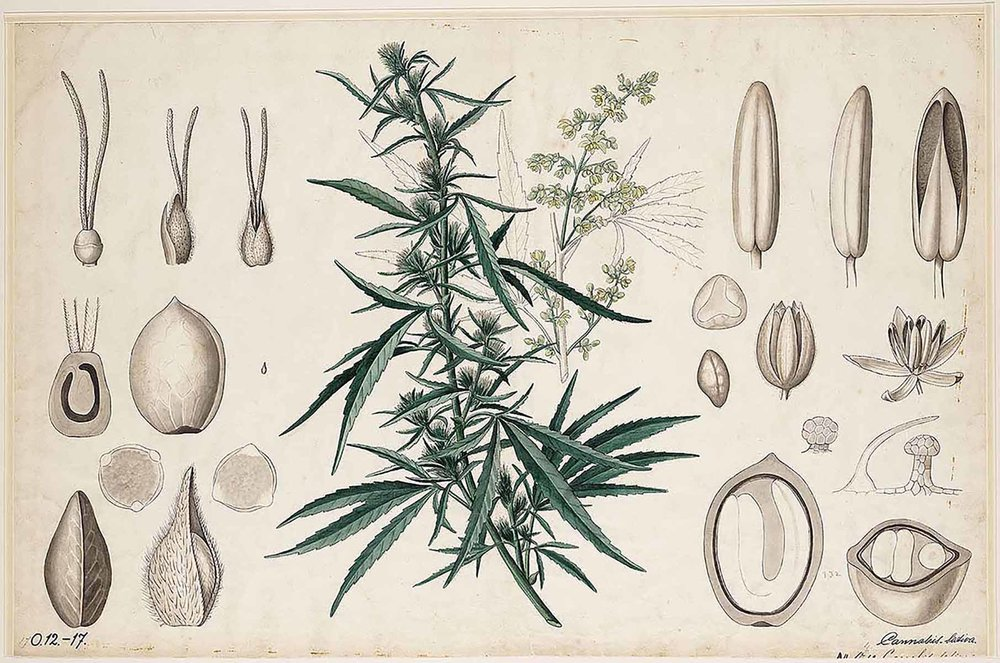 Cannabis Cultivation - Join us for this intensive workshop covering all aspects of successful growing, harvesting, and storing of this (now-legal) medicinal plant. Click here for more info.