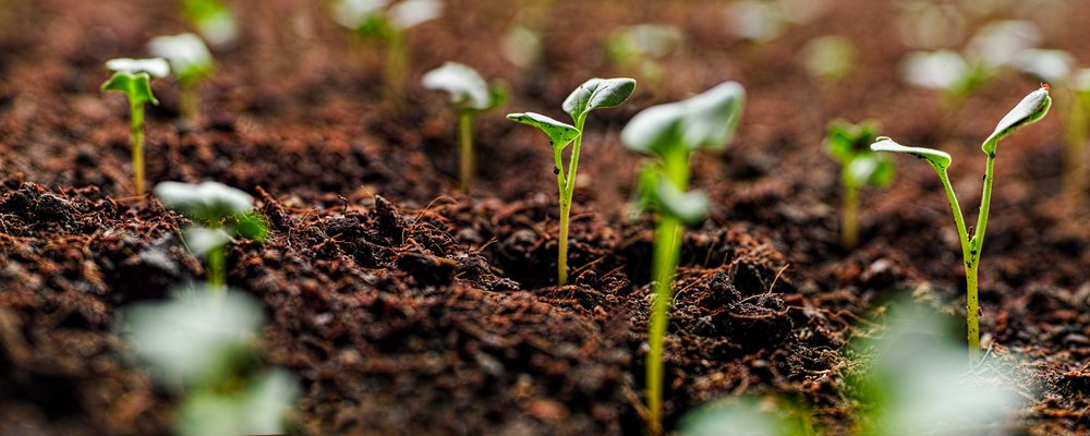 Soil Health and Preparation for Planting - Conor Fitzpatrick bestows upon you all you all the knowledge you need to get ready for a new planting season.