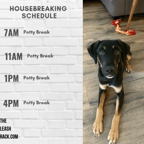 housebreaking.png