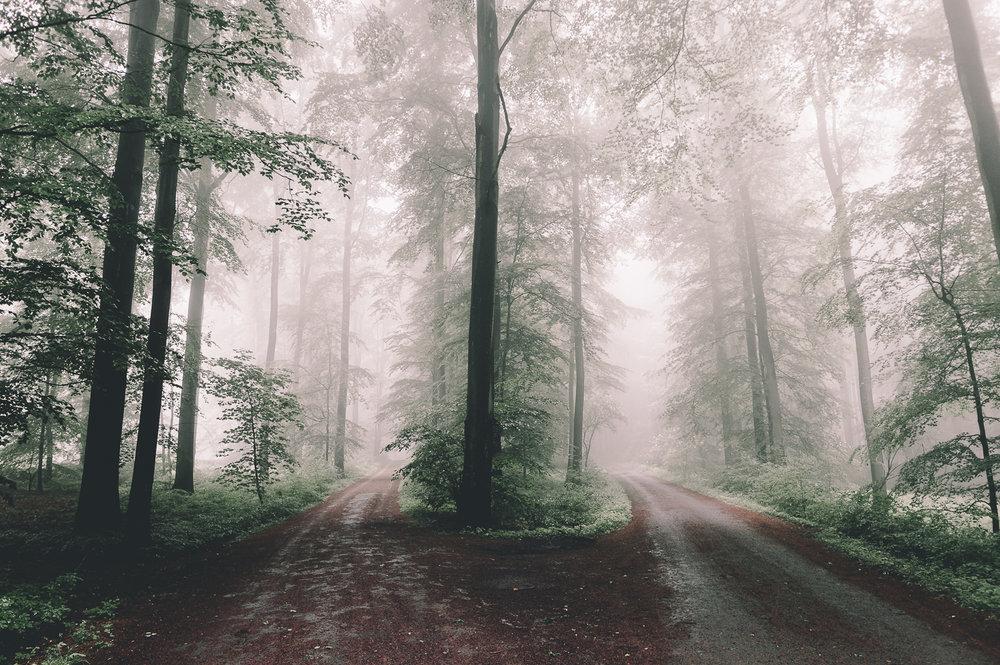 Soignes forest, Belgium