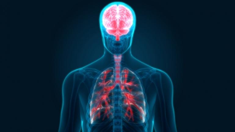 brain_lungs.jpg
