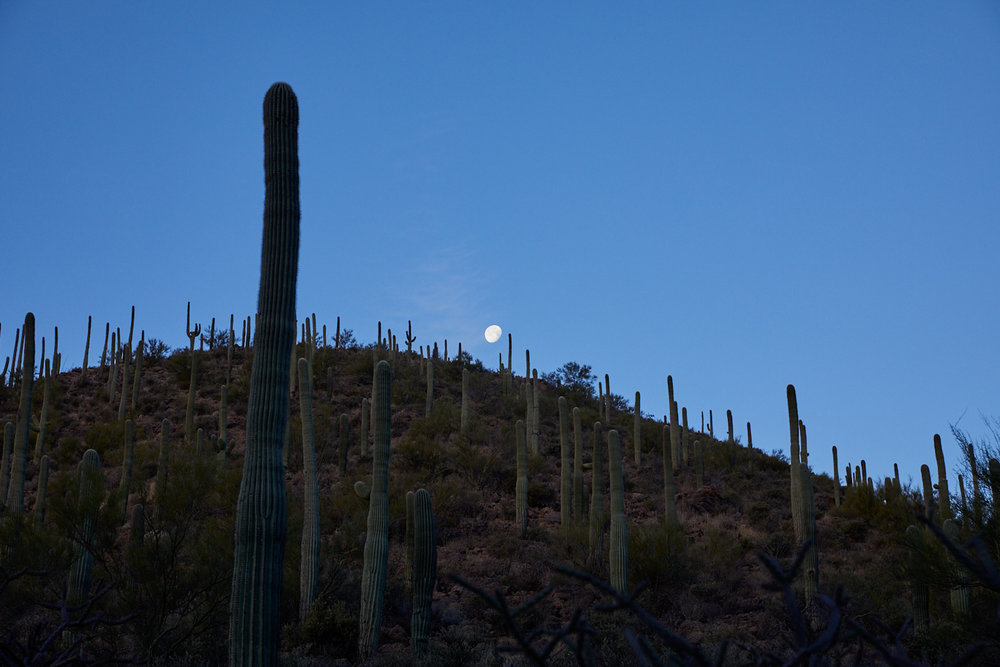 Sunrise and the Moon, Tucson    Photo: Lynda Churilla