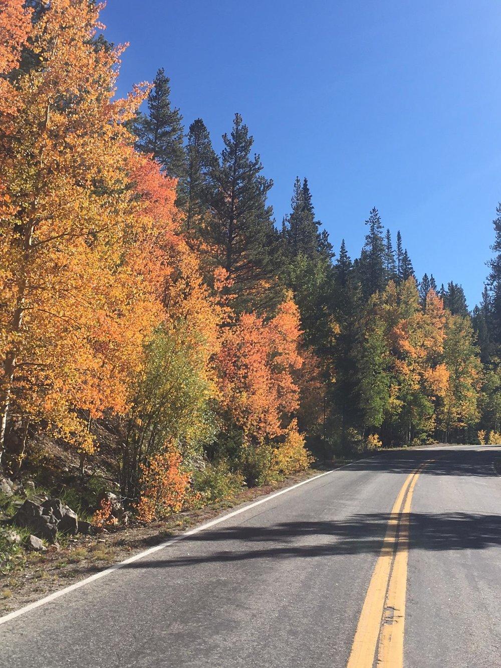 9.19.17 road & orange.JPG