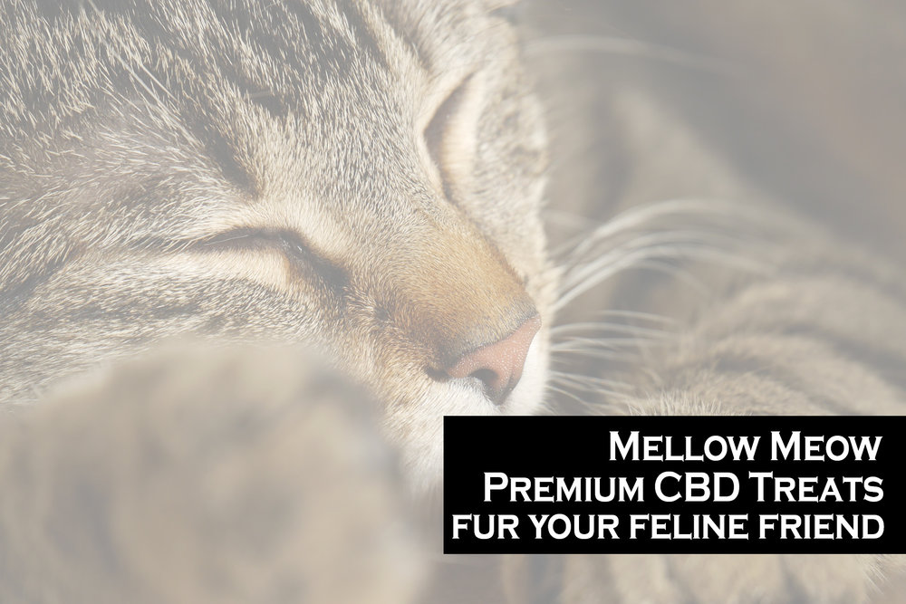 Mellow Meow