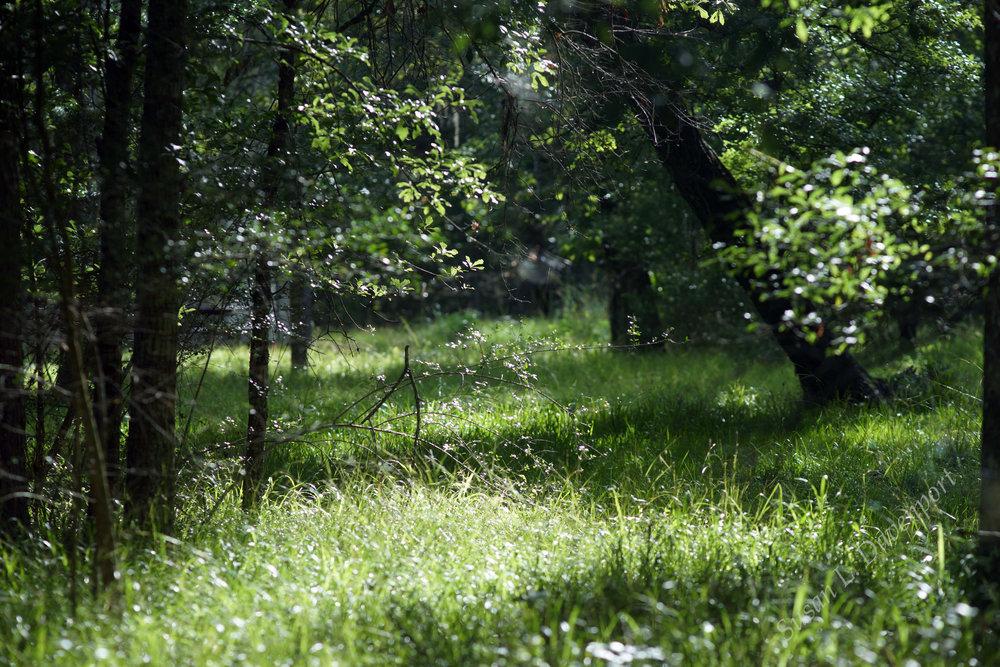 Walk-woods-sm-w.jpg