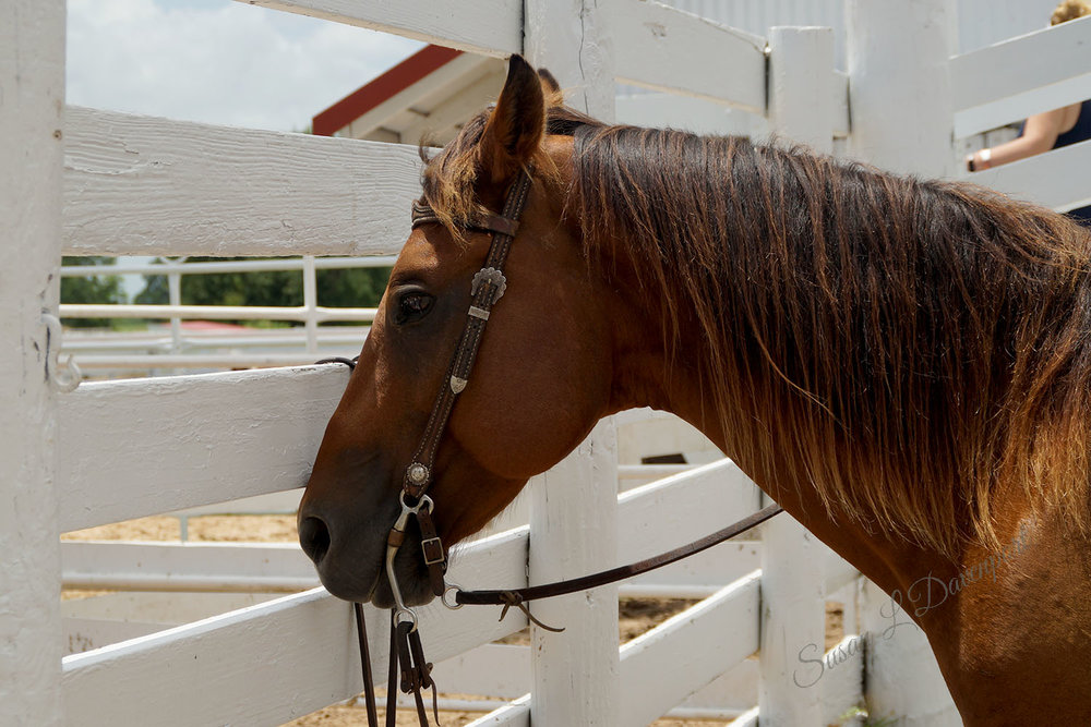 horse-jeremy-sm.jpg