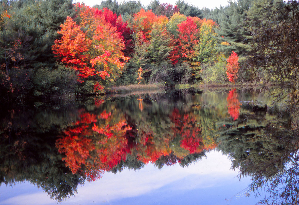 Beaver Pond - Photo by Paul Davenport