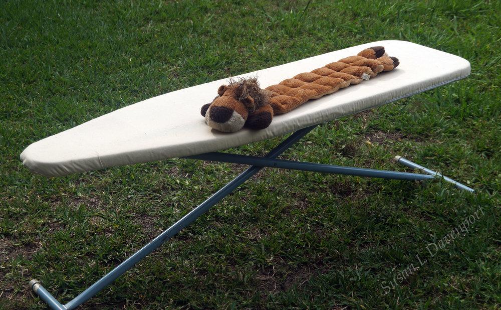 A Raccoon as Long as an Ironing Board? - Photo by Susan L. Davenport
