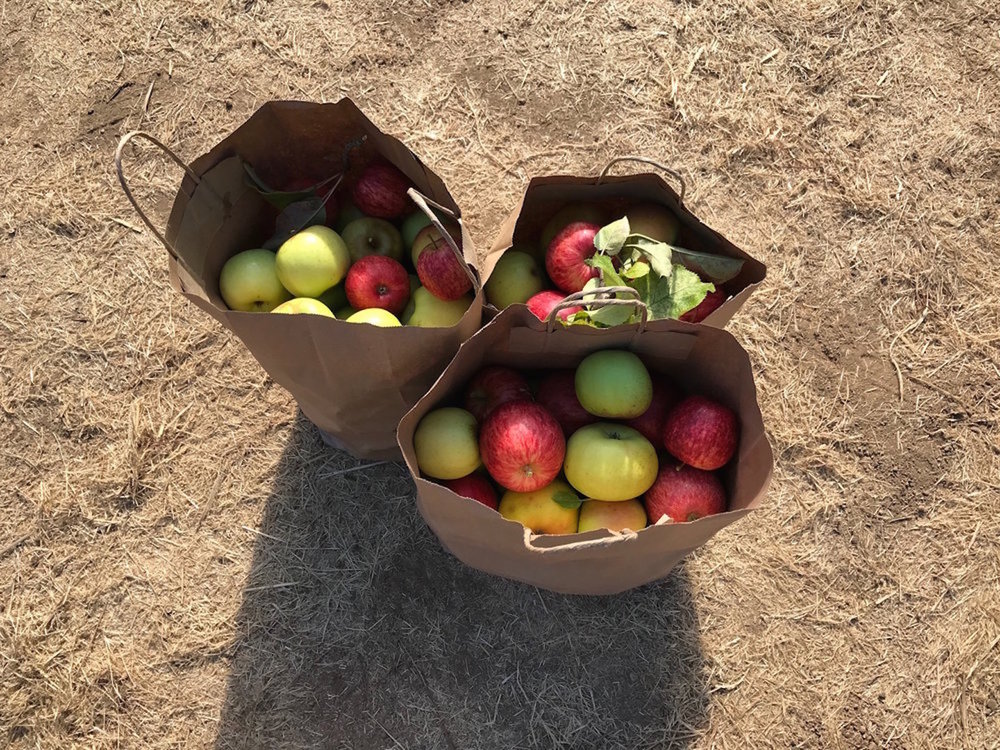 Apple picking season runs from August through October.