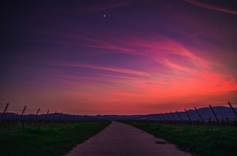 Sunset with red and purple streaks across the sky on long winding road through vineyards