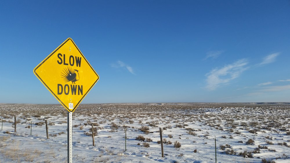 WY_slow down sage grouse country_Seth Gallagher.jpg