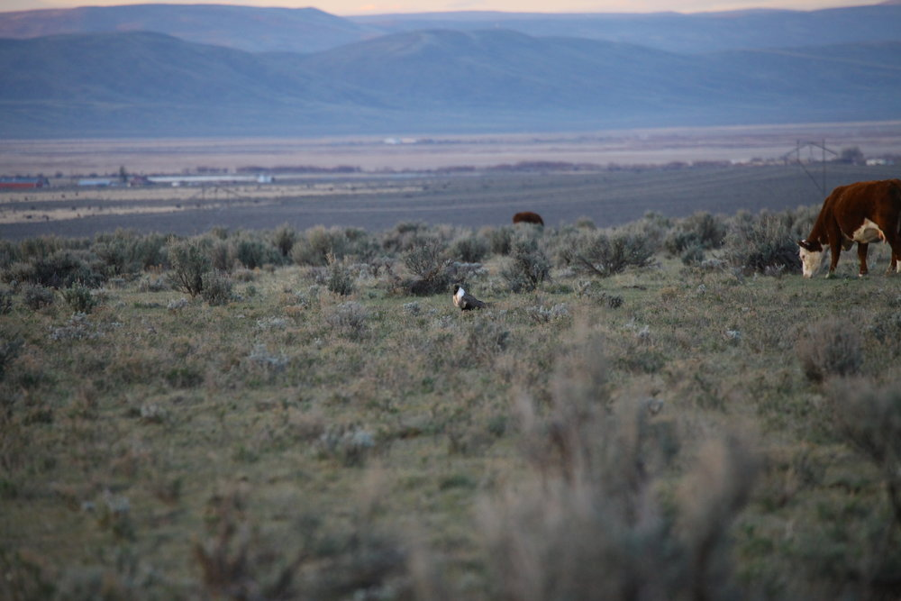 CO_sage grouse tour, Middle Park_Donn Slusher4.JPG