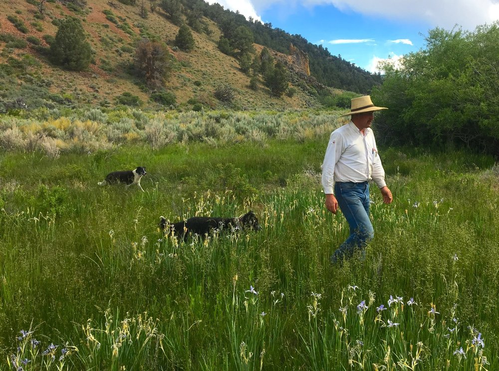CO_gunnison workshop wet meadow_Duane Coombs.JPG