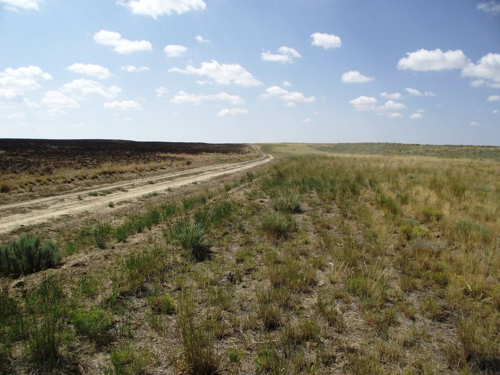 Serviceberry Butte Road where the Wildhorse Fire intersected the fuel breaks. -