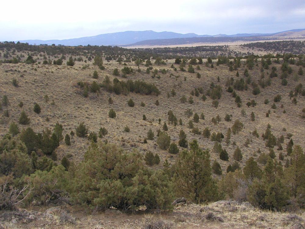 Landscape before conifer removal.